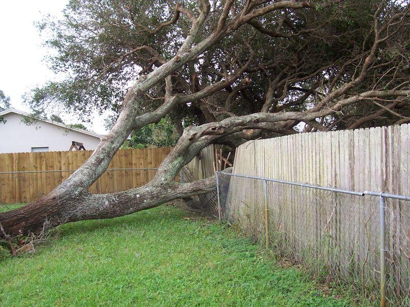 Neighbor tree charlie